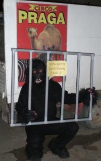gorillaprotest