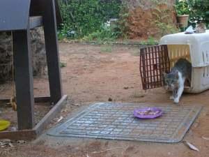 Cat neuter July 2009 (2)